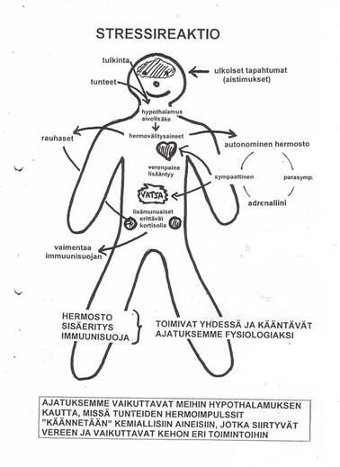 Autonominen Hermosto Ja Rytmihäiriöt